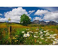 Blaven, and Summer Flowers, Torrin, Isle Of Skye, Scotland. Photographic Print