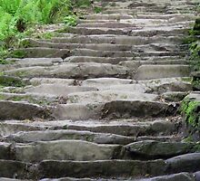 Steps by Gary  Collins
