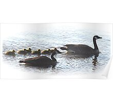 The Mr Canada Goose Family Poster