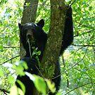 black bear attitude by dc witmer