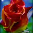 A Flower to a Daughter - LU...K by Roger Sampson