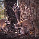 """Three Baby Bandits"" by Melinda Stewart Page"