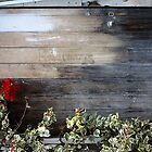 Old Shed Door by Alyson Killen