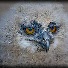 Baby Owl 1 ( One of four ) by jdmphotography