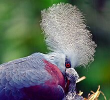 Common Crowned Pigeon and chick by David Clarke