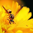 Wasp Amongst the Flowers by Dennis Stewart
