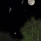 4 bats, one moon by Dale North Photography