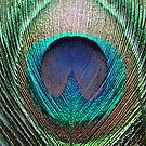 Peacock Feather by AravindTeki