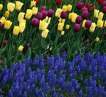 Tulip garden by Ghelly