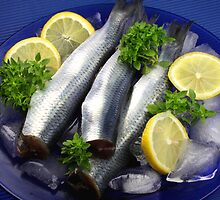 Fresh Herring by SmoothBreeze7