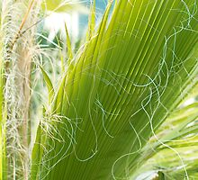 Palm Leaf by MariaVikerkaar