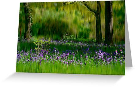 Bluebells by Trevor Kersley