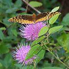 Thistle Moth by RainWolf