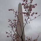 Washington Monument by Judson Joyce