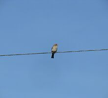 Bird on a Wire by Mandy  Merico