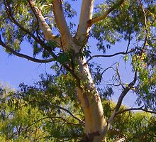 Gum trees by the roadside by JuliaWright