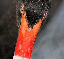 Black Swan by Steve Bullock