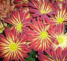 QUEEN ELIZABETH  PARK FLOWERS,VANCOUVER CANADA by DIANEPEAREN