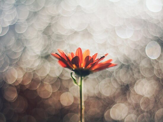 Bokeh Rain by Victor Oliveira