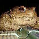 Toad - Macro by taiche