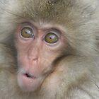 Snow Monkeys by Kellie Scott
