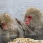 Monkey Grooming  by Kellie Scott