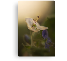 White and violet (from wild flowers collection)  Canvas Print