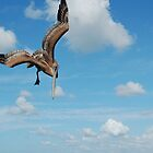 Diving Pelican by Ralph Angelillo