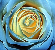 Fractal Rose by Mark Kopczewski