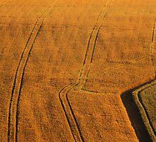 Barley field by woolleyfir