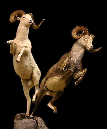 Leaping Rams by CarolM