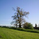 Seacroft tree view 2 by atombat