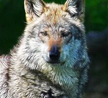 GREY WOLF FRACTALIUS by mlynnd