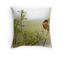 Male Baltimore Oriole (Special Effects)  Throw Pillow