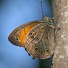 Lattice Brown by Robert Abraham
