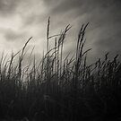 Wild Grasses #3372-2 by Paul Cooklin