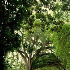 Hidden Birch among the Oaks by veteran