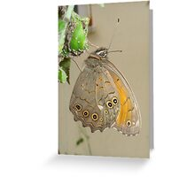 Butterflies and Aphids Greeting Card