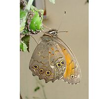 Butterflies and Aphids Photographic Print
