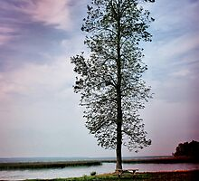 Tall Tree On the St. Lawrence by Vickie Emms