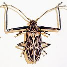 """Acrocinus longimanus"" Harlequin Beetle Watercolor by Paul Jackson"