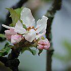 Romantic springtime by loiteke