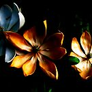 Illuminated Magnolias by Leslie Wood