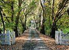 Blakiston - Adelaide Hills by LeeoPhotography