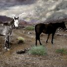 Ghost Horses on a High Plain by Wayne King