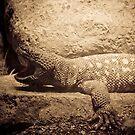 Beaded Lizard by Rachel Blumenthal