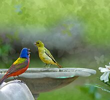Serenade by Bonnie T.  Barry