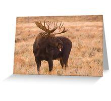 Bull Moose, Gros Ventre River, Wyoming Greeting Card