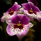 Orchids at the Conservatory by Rachel Blumenthal