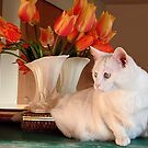 Snowball and the Tulips by Marjorie Wallace